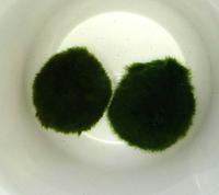 可愛い水草&可愛い植物